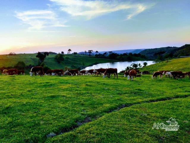 Fazenda à venda, 2699994 m² por r$ 6.500.000 - rural - reserva do iguaçu/pr