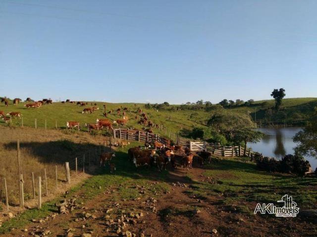 Fazenda à venda, 2699994 m² por r$ 6.500.000 - rural - reserva do iguaçu/pr - Foto 4