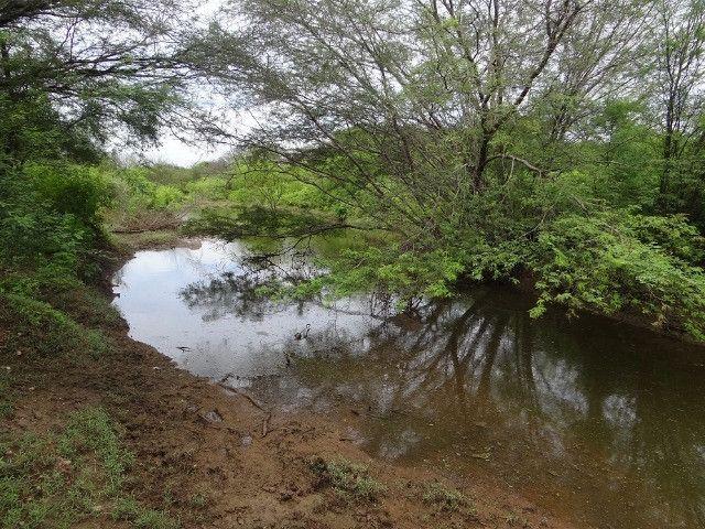 Fazenda sao paulo do potengi - Foto 13