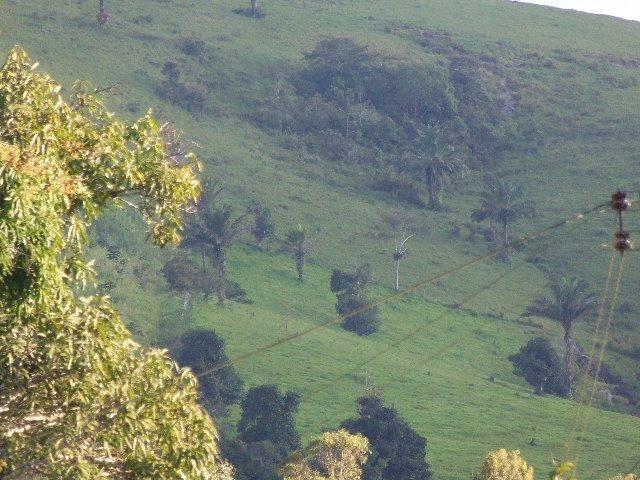 Fazenda com 700 Hectares em Barra de Guabiraba (Cód.: f20568) - Foto 3