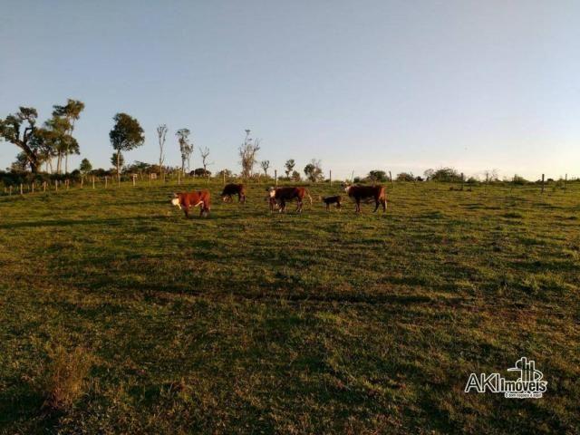 Fazenda à venda, 2699994 m² por r$ 6.500.000 - rural - reserva do iguaçu/pr - Foto 3