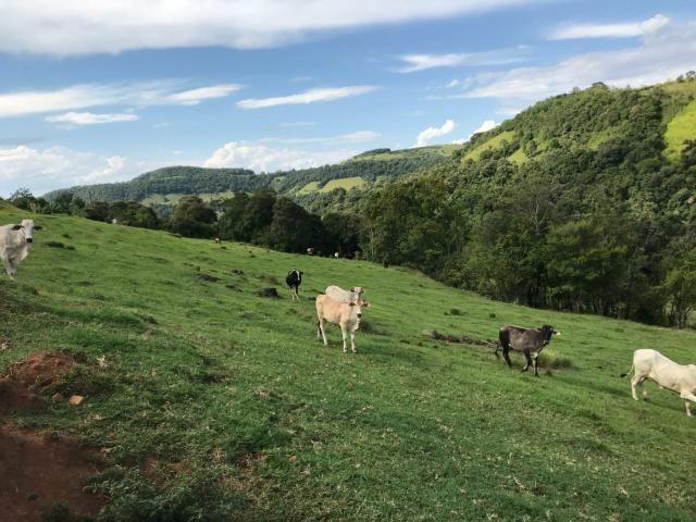 Área Rural - Foto 6