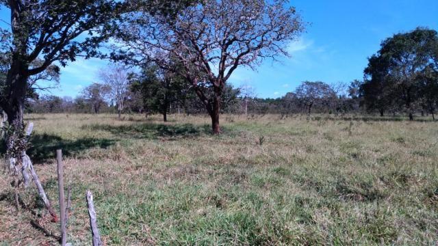 Fazenda 31 hectares em Curvelo/MG. - Foto 16