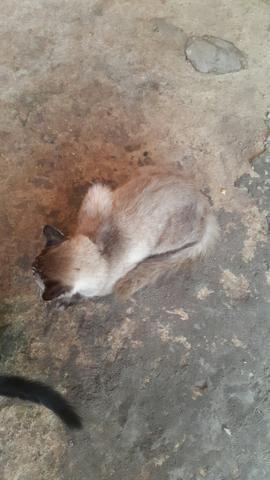 Libdo gato pqra doação