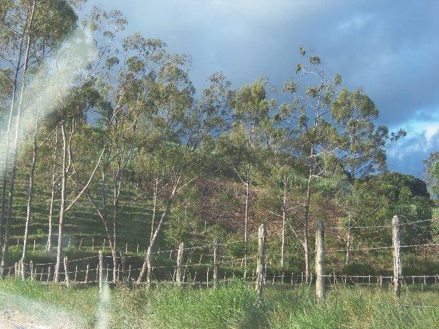 Fazenda com 700 Hectares em Barra de Guabiraba (Cód.: f20568) - Foto 15