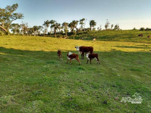 Fazenda à venda, 2699994 m² por r$ 6.500.000 - rural - reserva do iguaçu/pr - Foto 7