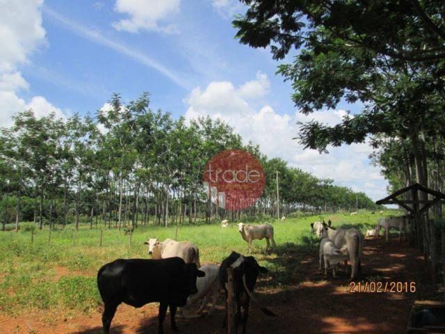 Fazenda rural à venda, Centro, Buritizeiro. - Foto 4