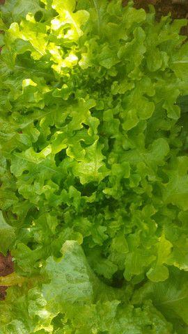 Verduras com preços especiais para vcs - Foto 2