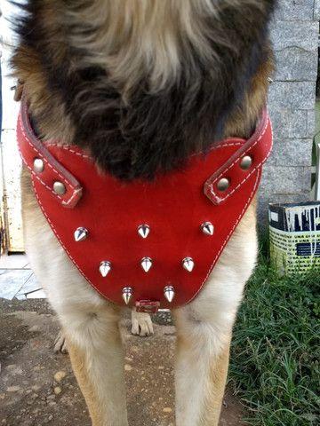 Kit para cachorros de médio e grande porte feito de couro confortável - Foto 3