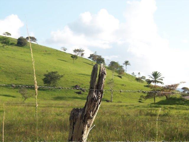 Fazenda com 700 Hectares em Barra de Guabiraba (Cód.: f20568) - Foto 6
