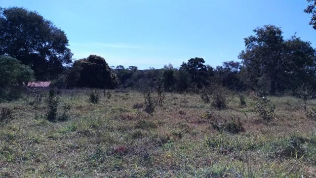 Fazenda 31 hectares em Curvelo/MG. - Foto 2