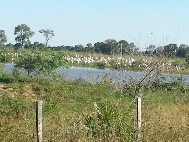 Fazenda em Corumbá - MS. 20.070 hectares - Foto 7