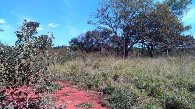 Fazenda 31 hectares em Curvelo/MG. - Foto 10