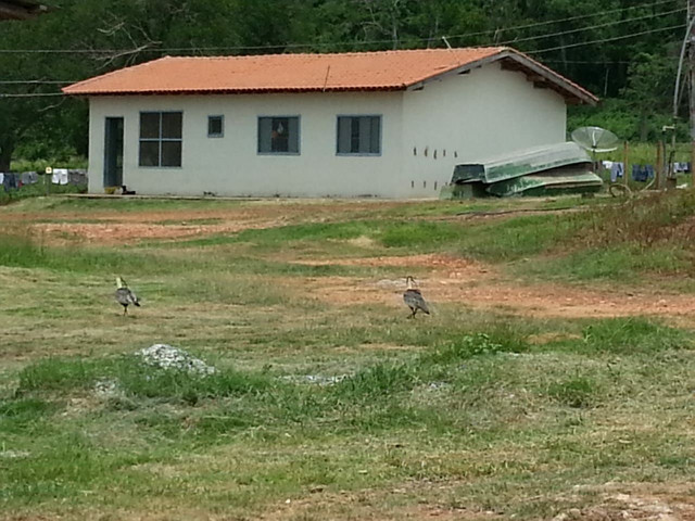 Fazenda em Corumbá - MS. 20.070 hectares - Foto 11