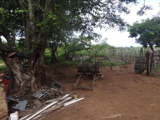 Fazenda sao paulo do potengi - Foto 12