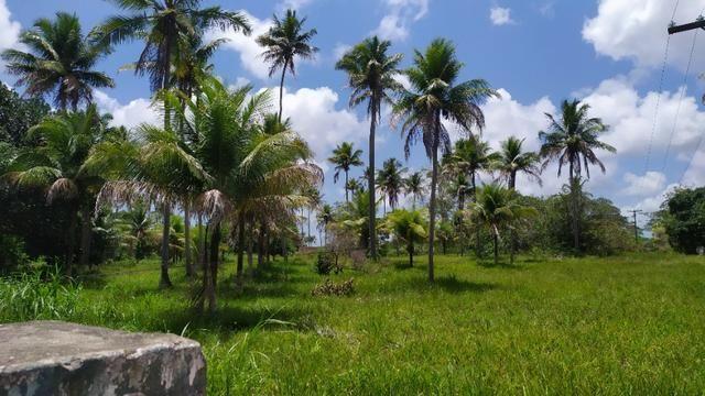 Vende-se excelente sitio em Igarassu, bem localizado - Foto 2