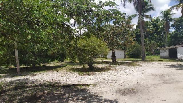 Vende-se excelente sitio em Igarassu, bem localizado - Foto 13