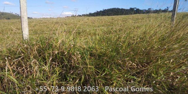 Bahia 200 hectares Pecuária - Foto 13