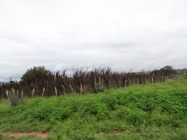 Fazenda sao paulo do potengi - Foto 5