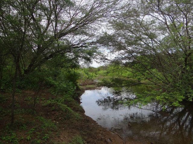 Fazenda sao paulo do potengi - Foto 15