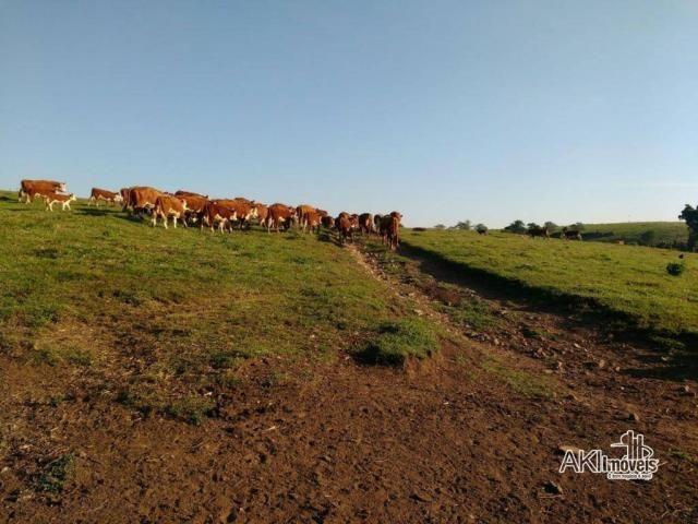 Fazenda à venda, 2699994 m² por r$ 6.500.000 - rural - reserva do iguaçu/pr - Foto 6