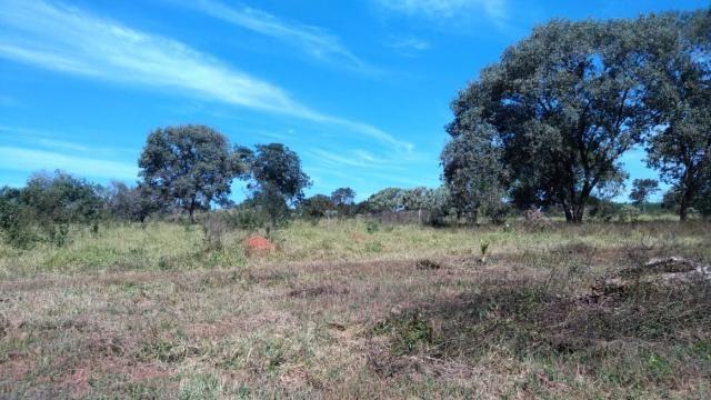 Fazenda 31 hectares em Curvelo/MG. - Foto 4