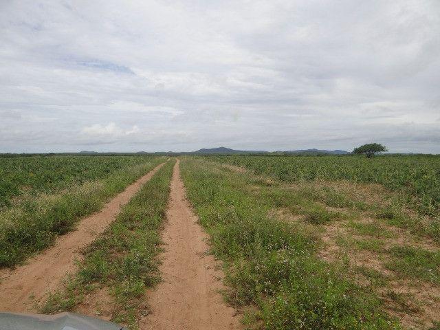 Fazenda sao paulo do potengi - Foto 8