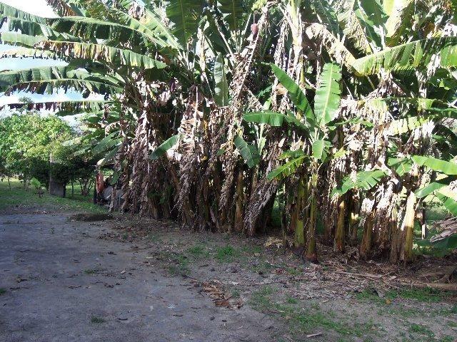 Fazenda com 700 Hectares em Barra de Guabiraba (Cód.: f20568) - Foto 7