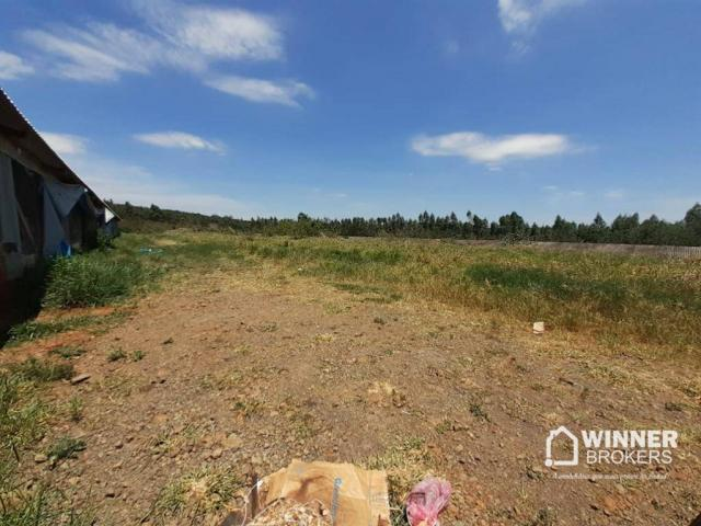 Sítio à venda, 242000 m² por R$ 3.500.000,00 - Rural - Mandaguaçu/PR - Foto 8