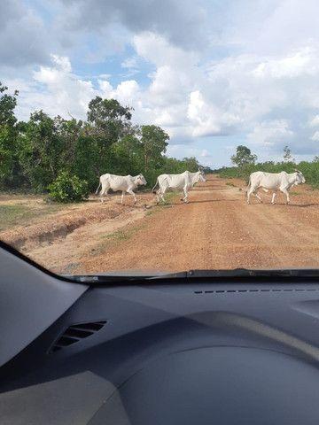 Fazenda Pitomba - 632 Hectares - Conceição do Tocantins - F210210