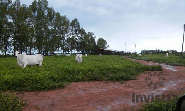 Maravilhosa Fazenda equipada para Agropecuária com Potencial para Intalação de Pivôs