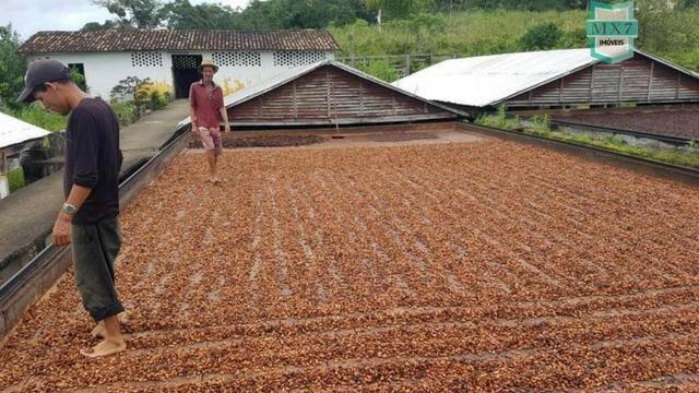 Ubaitaba. Fazenda de 450 Hectares, produção de cacau e gado, completa infraestrutura. - Foto 4