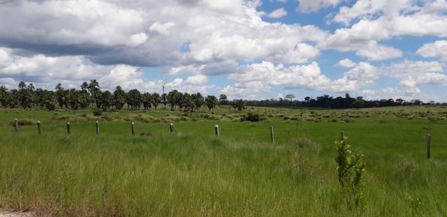 Fazenda em Roraima top - Foto 11