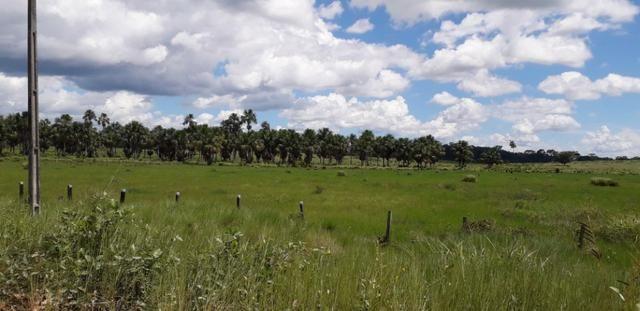 Fazenda em Roraima top - Foto 12