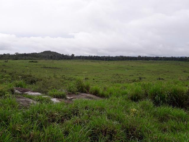 fazenda em roraima- caroebe vicinal 06