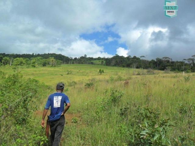 Fazenda Itamaraty com 300 Hectares, potencial para 300 gados, 70 hectares de cacau - Foto 15