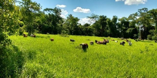Fazenda - Sítio à venda, Centro - Corinto/MG - Foto 8