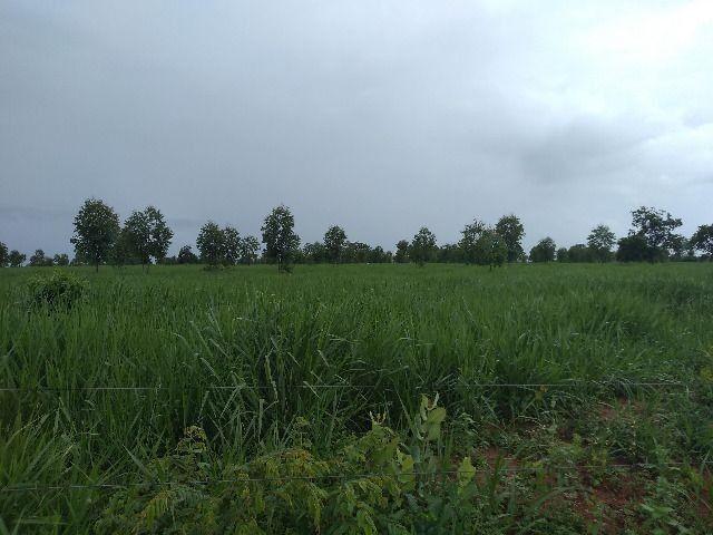 Oportunidade Entrada R$ 1.200.000,00 restante em 05 anos sem juros - planta 300 hectares - Foto 4