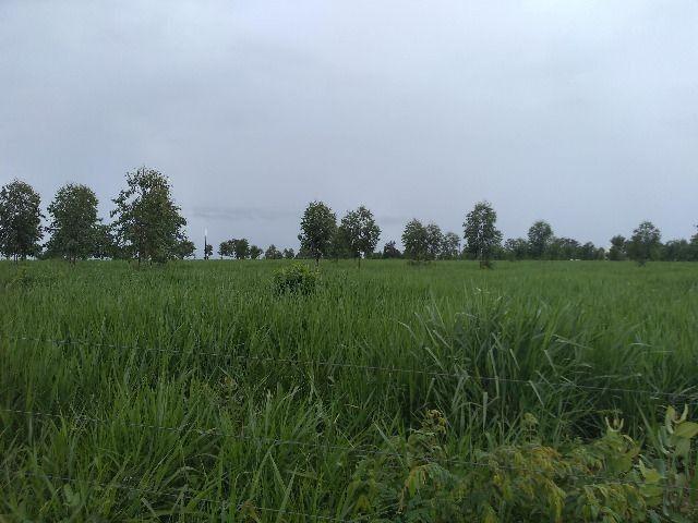 Oportunidade Entrada R$ 1.200.000,00 restante em 05 anos sem juros - planta 300 hectares - Foto 9