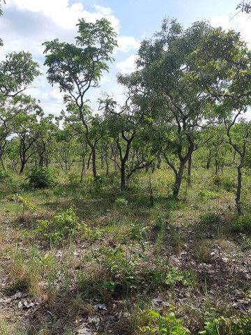 Fazenda Pitomba - 632 Hectares - Conceição do Tocantins - F210210 - Foto 7