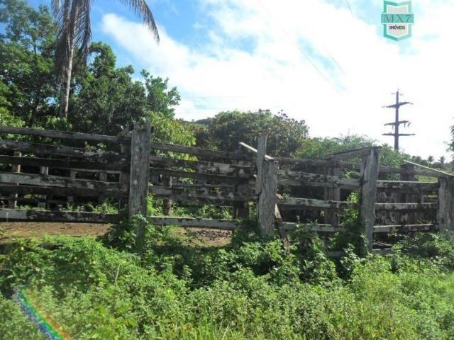 Fazenda Itamaraty com 300 Hectares, potencial para 300 gados, 70 hectares de cacau - Foto 14