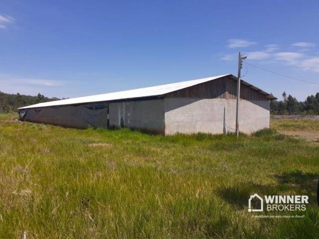 Sítio à venda, 242000 m² por R$ 3.500.000,00 - Rural - Mandaguaçu/PR - Foto 2