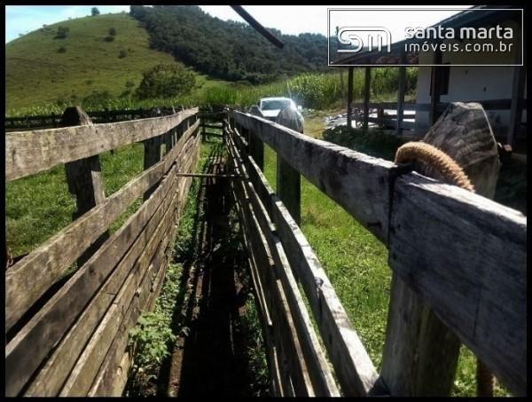 FAZENDA EXCELENTE - GADO CORTE/LEITE - GUARATINGUETÁ - SP - Foto 9