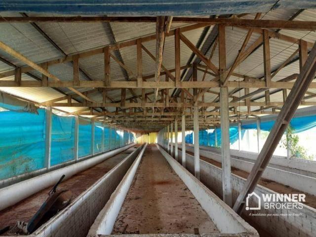 Sítio à venda, 242000 m² por R$ 3.500.000,00 - Rural - Mandaguaçu/PR - Foto 7