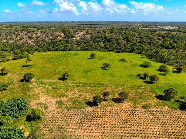 Área - Fazenda - Barra Maxaranguape - Foto 7