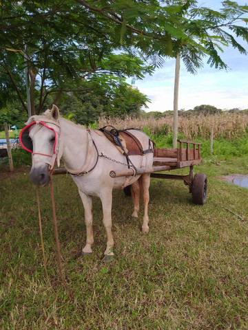 Carroça completa, com cavalo e arreios. - Foto 4