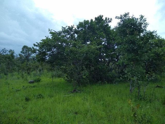 Fazenda Pitomba - 632 Hectares - Conceição do Tocantins - F210210 - Foto 3