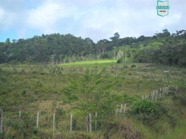 Fazenda Itamaraty com 300 Hectares, potencial para 300 gados, 70 hectares de cacau - Foto 9