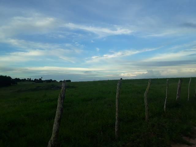 Fazenda com 50 hectares  estruturada na região de Monte Alegre   - Foto 8