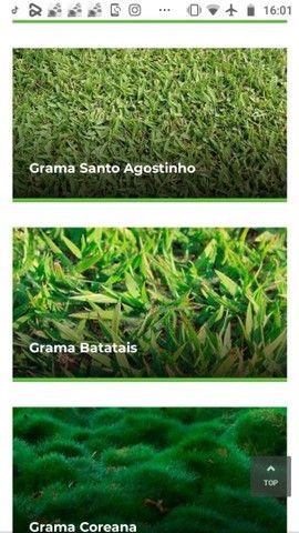 Gramas  - Foto 5